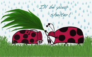 Lady bugs ~ I'll Be Your Shelter