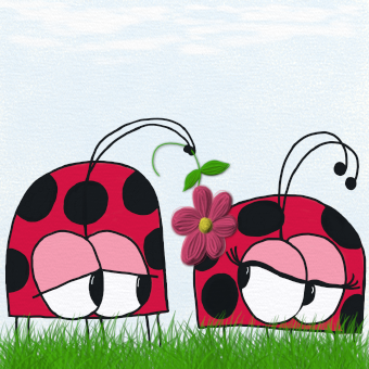 Ladybug Wooing His New Love :)